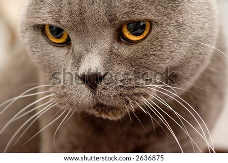 My Cat - stock photo