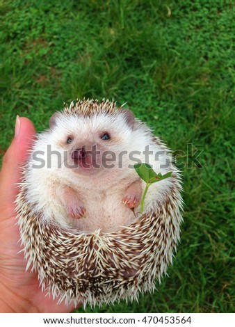 My hedgehog has got a favorite trefoil