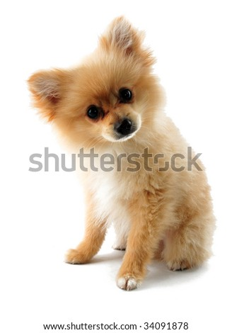 Sad puppy face stock images royalty free images vectors my little puppy voltagebd Gallery