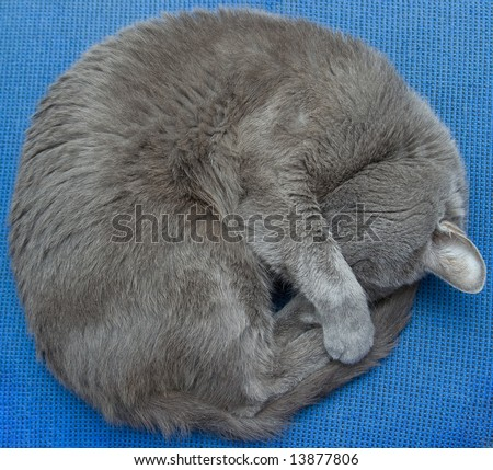 My lovely cat sleep on a chair - stock photo