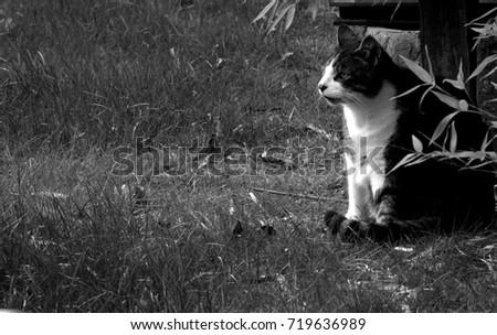my pet tabby cat is looking at something interesting across the garden - My Pet Garden