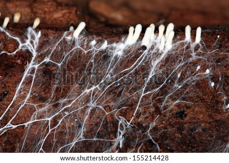 mycelium - stock photo