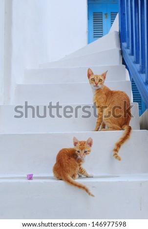 Mykonos Cats - stock photo