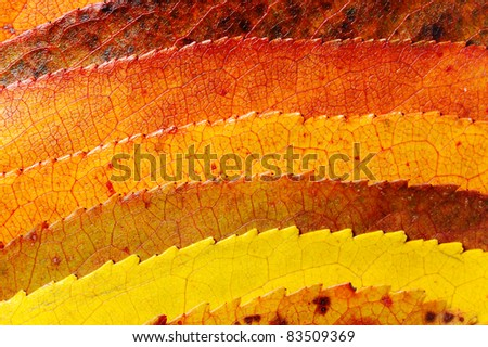 Mysterious autumn foliage