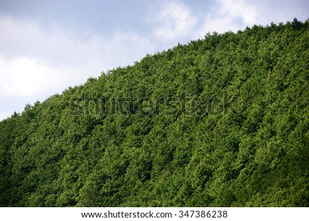Mysterious cedar forest in Kumano Kodo, the ancient pilgrim route in Kii Mountains, Wakayama Prefecture, Japan - stock photo