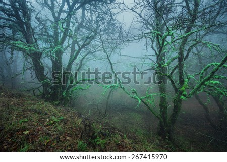 Mysterious dark autumn forest in blue fog with leaves, green plants, trees and branches . Autumn morning in Crimea (Mountain Ai-Petry)
