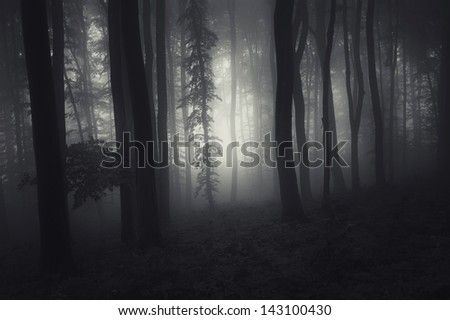 mysterious dark forest with black trees - stock photo