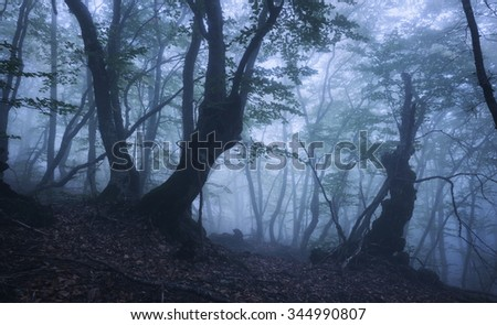 Mysterious dark old forest in fog. Autumn morning in Crimea. Magical atmosphere. Beautiful natural landscape.