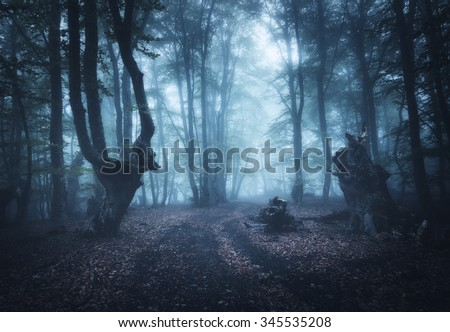 Mysterious dark old forest in fog. Autumn morning in Crimea. Magical atmosphere. Beautiful natural landscape. - stock photo