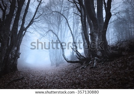 Mysterious dark old forest in fog. Autumn morning in Crimea. Magical atmosphere. Beautiful natural landscape. Vintage style
