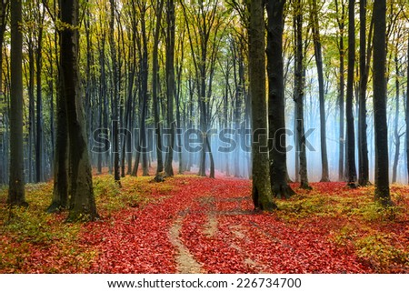 Mysterious fairytale foggy forest during autumn - stock photo