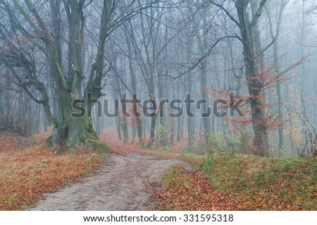 Mysterious foggy autumn forest