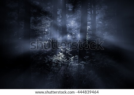 Mysterious foggy dense woods at dawn