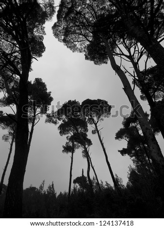 mysterious foggy forest silhouette in winter - stock photo