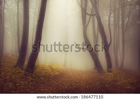 Mysterious foggy forest with a fairytale look - stock photo