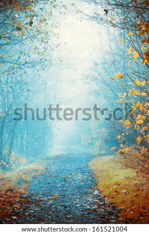 Mysterious, foggy way in autumn - stock photo