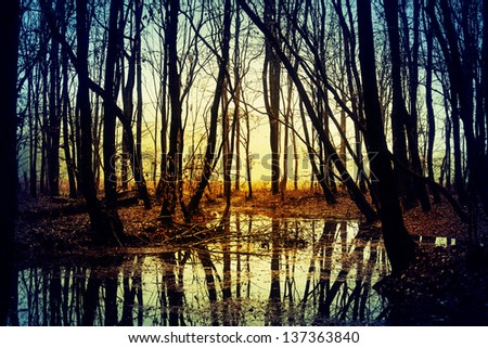 Mysterious forest in autumn - stock photo