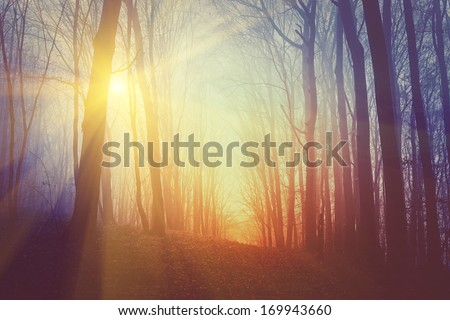 Mysterious forest in fog and sun light. - stock photo