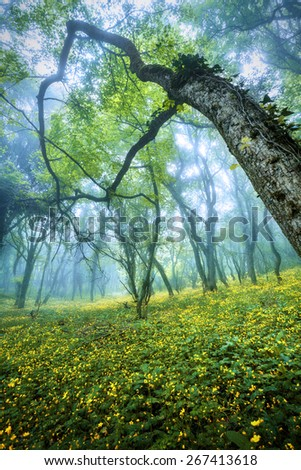 Mysterious forest in fog with green leaves, yellow flowers and blue sky. Beautiful spring morning in Crimea. Magical atmosphere. Fairytale - stock photo