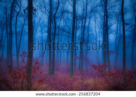 Mysterious forest in the morning mist - stock photo