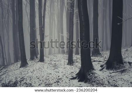 mysterious forest in winter - stock photo