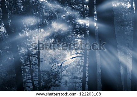 mysterious forest on a full moon misty night - stock photo