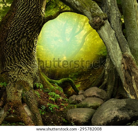 Mysterious forest with old trees, light and rocks - stock photo