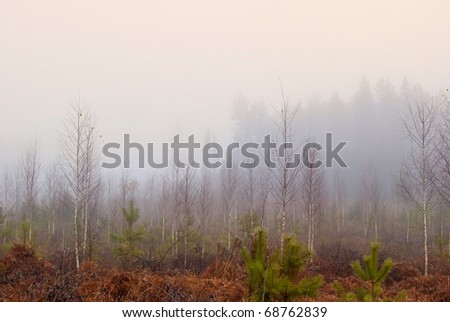 mysterious landscape: forest clearing in misty morning - stock photo