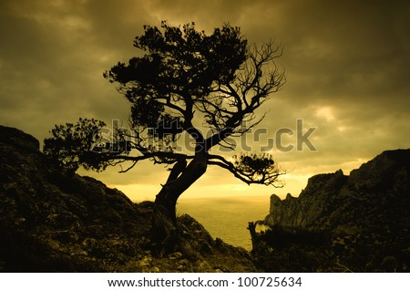 mysterious lone tree at dusk on the beach - stock photo