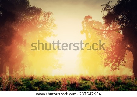 Mysterious Magical Fantasy Fairy Tale Forest Sunset Sunrise 3D artwork