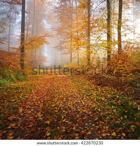 Mysterious morning fog in a beautiful beech tree forest. Forest road with autumn trees with yellow and orange foliage. Heidelberg, Germany - stock photo