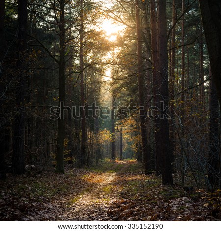 Mysterious pathway in the woods during autumn season - stock photo