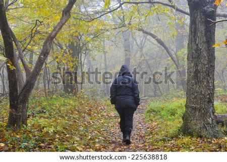 Mysterious person walks into foggy forest - stock photo