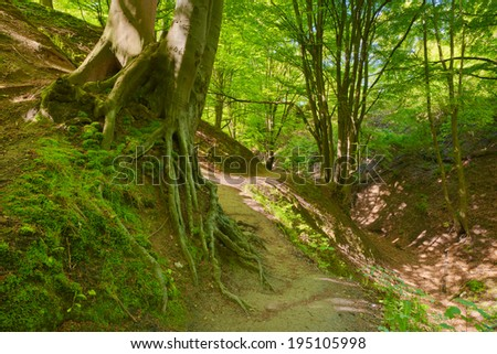 Mysterious way by green deciduous forest scenery. Moss on beech roots. Trees in The Fox Ravine (Lisi Jar) nature reserve, Poland. - stock photo