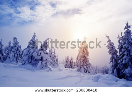 Mysterious winter landscape. Mountain forest under snow - stock photo