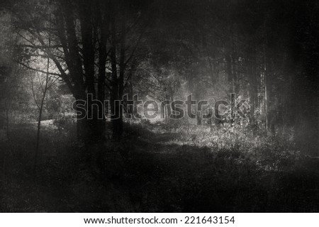 Mysterious Woods - stock photo