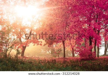 mystery  autumn in sunny forest, natural background - stock photo