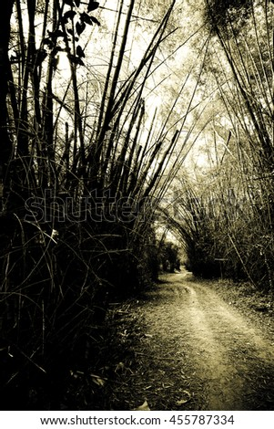 mystery bamboo forest with monotone color - stock photo
