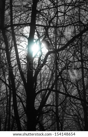 mystic and deep, misty forest in a blue moon night, with  grey scale trees, that seems to disappear in the fog, a black bird and two transparent ghost birds with a white shining - stock photo