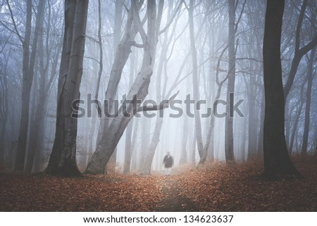 Mystic and magic for during autumn in the forest