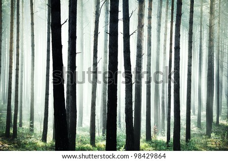 Mystic bright green forest - stock photo