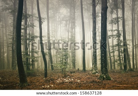 Mystic fantasy autumn wild forest. - stock photo