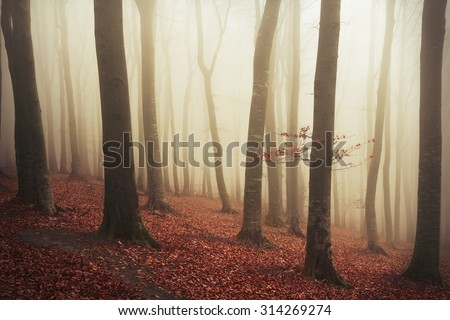 Mystic fantasy forest in autumnal colors  - stock photo