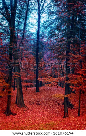 Mystic foggy forest in bright colors - stock photo