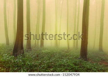 Mystic forest during a foggy day. A fairytale landscape with magic light - stock photo