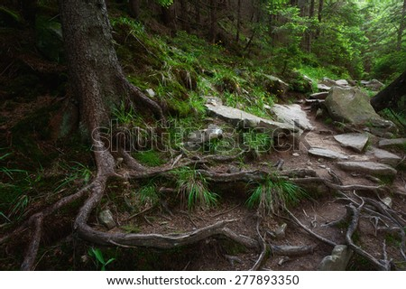 Mystic forest in the Carpathian mountains - stock photo