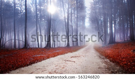 Mystic forest road with with red leaves on the ground. - stock photo