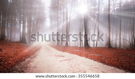 Mystic forest road with with red leaves on the ground and lovely sunbeams. - stock photo