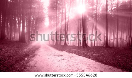 Mystic marsala red sunny light forest road and lovely sunbeams. - stock photo