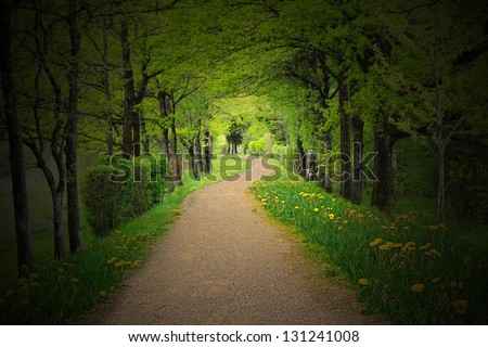 mystical alley through dark beech forest with lighting, fairy landscape - stock photo